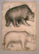 Two Bears. Pisanello