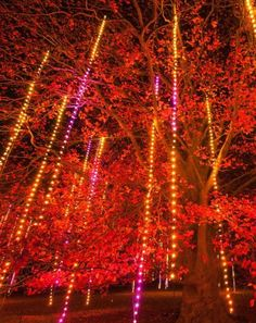 Great places to see holiday lights in Illinois, including The Morton Arboretum: http://www.midwestliving.com/travel/30-great-places-to-see-holiday-lights/?page=3