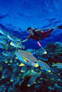 The Great Barrier Reef, Australia by Janny Dangerous