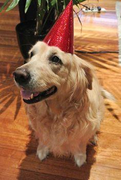 Dog celebrating her 11th birthday :)