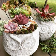 These owl planters are just too stinking cute not to share! That diamond state!!! Check out Irish's new succulent page. Her collection is totally swoon worthy!:@budzsucculents #echeveria #echielove #nature #plants #greenhouse #raresucculents #succulove #sedum #aeonium #graptopetalum #gardening #succulentbed #echeveria #succulentsanonymous #succulentplant #succulentlover #succulenttherapy #succulentlife #suculentas #succulentcity #succulentcommunity#charliethecat #iswoon #zonarosasu...