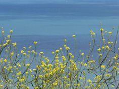Wild flowers against the sea by GeaAusten.deviantart.com on @DeviantArt