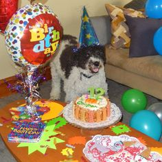 Cooper's 12th Birthday March 2015