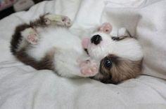 So stinkin cute!