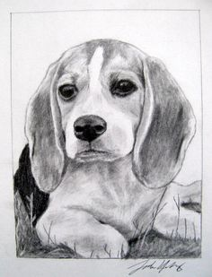 Beagle Dog Drawings for Sale