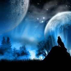 Take the quiz and find out how much wolf is in your blood. Are you a wolf or are you just a normal human. (This is my first quiz) Wolf Wolf Wallpaper, Computer Wallpaper, Nature Wallpaper, Wallpaper Gallery, Beautiful Wallpaper, Wallpaper Wallpapers, Iphone Wallpaper, High Resolution Wallpapers, Wolf Moon