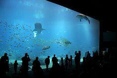 Georgia Aquarium, we spent quite a bit of time in this room while visiting.