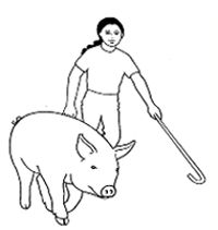 How to show your swine. Great tips for beginner showmen.