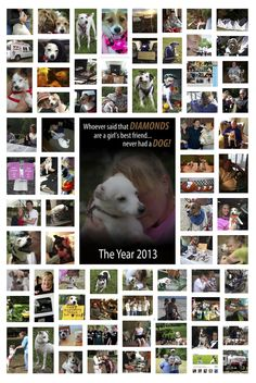 2013 was such a monumental year for us! Even though we've been around for a decade, our little rescue has never known such an outpouring of love – from volunteers, adopted/foster parents and supporters around the globe. We are so thankful for social media and the Internet to help us spread our mission and find JRT lovers around the world.