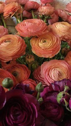 Pretty Flowers, Fresh Flowers, Peonies, Tulips, Wholesale Flowers And Supplies, Diy Wedding, Wedding Flowers, My Flower, Hydrangea