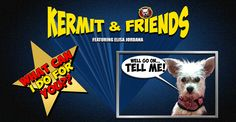 Need something? A favor or advice? Want to be connected with somebody? I am here to help YOU!!! See more http://kermitandfriends.com/kermit-and-friends-episode-034-what-can-i-do-for-you/