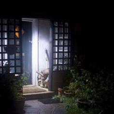 Bright Outdoor LED Light Solar Energy Powered Weatherproof Outdoor Home Protect Backyard Walkway, Flagstone Walkway, Patio, Walkways, Solar Spot Lights Outdoor, Outdoor Lighting, Solar Lights, Solar Powered Spotlight, Solar Security Light