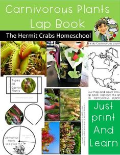 If you are teaching about plants in your classroom this is a project you do not want to miss. Not only will you be teaching about plants but also in predators. As, these species of plants are considered predators. This lap book is hands on. no answer