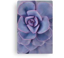 Purple Pearl Canvas Print