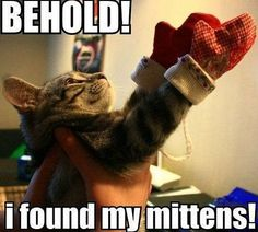 Kittens and mittens. :)
