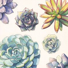 Playing around with succulent pattern design. Watercolor & Ink rosettes - echeverias, sedum, and graptopetalum.
