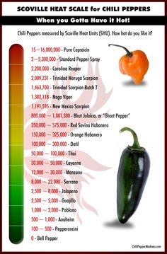 "The Scoville Scale of Chili Peppers List from Hottest to Mildest: The Scoville unit was named for Wilbur Scoville in 1912. At the time, he worked for a pharmaceutical company named Parke-Davis where he developed a test called the ""Scoville Organoleptic Test"" which is used to measure a chili pepper's heat."