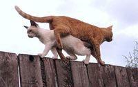 思いやり、気遣いも忘れずに : 【猫道】 塀、難所を歩く猫にゃん - NAVER まとめ