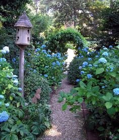 Shade path, hydrangeas and birdhouse