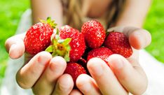The Northwest offers plenty of ways for families to enjoy summer berries. Your first stop this summer could be Remlinger Farms in Carnation, where the strawberry fields open in June. Blueberry Farm, Blueberry Bushes, Strawberry Farm, Strawberry Fields, Strawberry Nutrition, Agriculture, Farms In Nj, Seattle Activities, Summer Activities