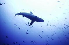 Look up at a shark
