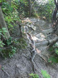 Giant Anaconda Skin Stokes Mystery of Maine's Elusive 'Wessie'
