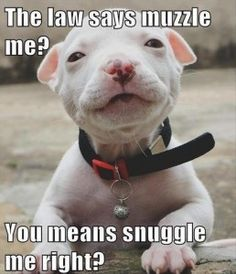 cute dogs funny pictures