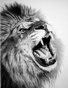 Framed Print - Pencil Sketch Of A Roaring Lion (Picture Poster Animal Art) #ebay #Home & Garden