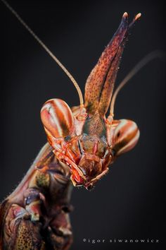 i-6a3b2f7cf514a69820a503be69304dc0-mantis head3.jpg (680×1020)