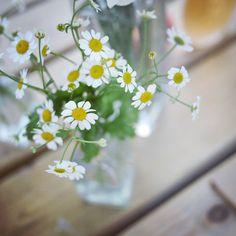 SnapWidget | Noche de flores con el corazón #madresaireloewe #disparaconelcorazon #milupitaxquerida # lumixgx7 #airedeloeweatardecer