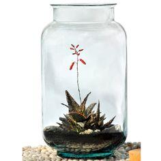 Glass Terrarium Containers Wholesale Part 98