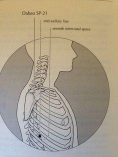 Spleen 21 21st, Diagram, Healing, Chart