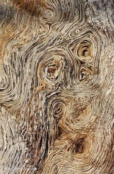 casca de árvore.  por Jacquelyn