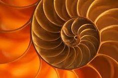 Resultado de imagem para natural patterns art