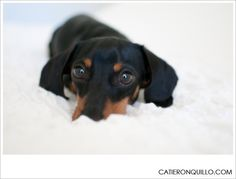 Black and Tan Dachshund Photos | Dallas Wedding Photographer - Catie Ronquillo Photographer