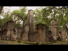 Ancient Oaks and Ruins at Florida's Bulow Creek State Park