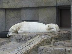 お母さんの足を枕にして寝てるZoo
