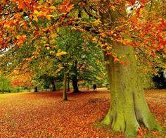 luonto, rauhallinen, lehdet, kaunis