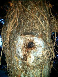 Wood eye #insta #photo #tree