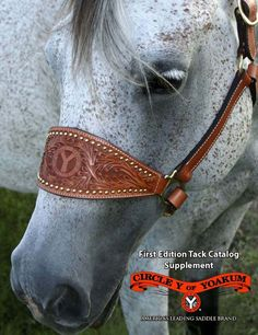 Circle Y Saddles - Western Saddles, Trail Riding Saddles, Barrel Sadles, Roping Saddles