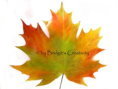 My paper leaves Paper Leaves, Leaf Template, Autumn Leaves, Quilling, Creative, Projects, Bedspreads, Log Projects, Blue Prints