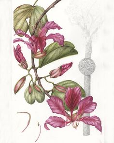 Sally Bunker – The Society of Botanical Artists