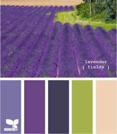 lavender fields palette via Design Seeds Scheme Color, Colour Pallette, Color Palate, Colour Schemes, Color Combos, Purple Palette, Design Seeds, Lavender Fields, Lavender Color