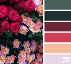 flora palette                                                                                                                                                     Más