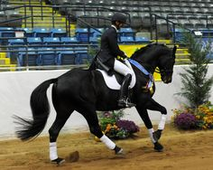 Don Principe (Donnerhall-Prince Thatch xx) 1999 Hanoverian Stallion #HTFstallion