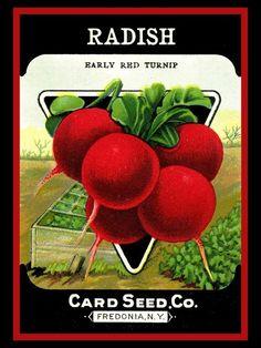 #seedpackets