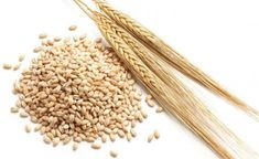 Basic Information About Barley     Barley is a cereal which carries the title of the oldest known cultivated cereal on the planet Earth. ...