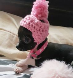 Chihuahua Hats - The Cutest Hats For Chihuahuas - Chiwawa Dog Chihuahua Puppies, Cute Puppies, Cute Dogs, Bulldog Puppies, Chihuahuas, Funny Dog Pictures, Cute Animal Pictures, Beautiful Dogs, Animals Beautiful