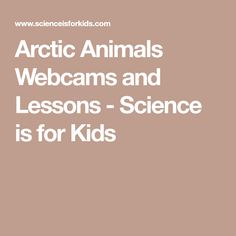 Arctic Animals Webcams and Lessons - Science is for Kids