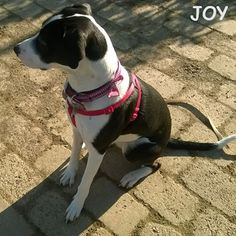 I'm always a good girl at the park!! 🐾🐾🐶 Follow JOY at her Facebook page for many more photos and videos:  https://www.facebook.com/JOYMixedBreedGirl/  #dog #instagramdogs #ilovemydog #instapuppy #dogfamily #doggie #ilovemypet #dogofinstagram #happydog #dogface #dogsofig #dogselfie #doglovers #dogsofinstaworld #petstagram #doglover  #petlover #instadog #dailypawwoof #happydog_feature #dogsubmit
